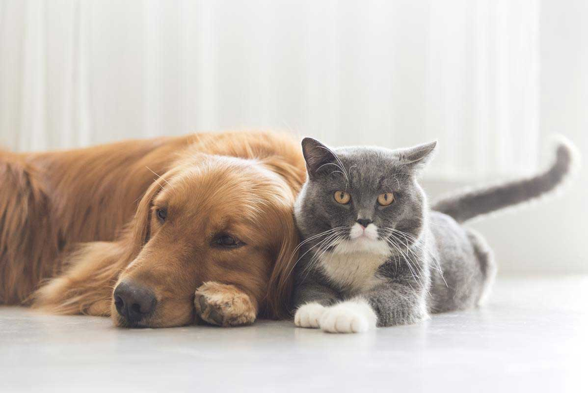 about our veterinary practice Little Rock, Caddo Valley & Malvern, AR