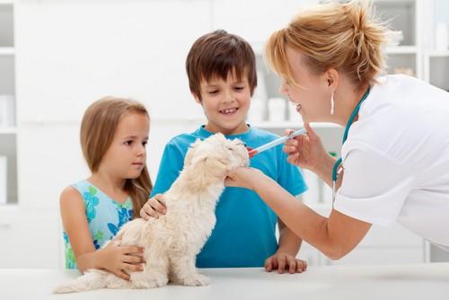 Vaccinations Little Rock, Caddo Valley & Malvern, AR